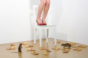 Mouse-Phobia